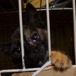 野良猫の目が赤い 目ヤニがひどい時