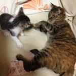 先住猫と子猫の相性ってある?