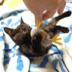 子猫が噛む時に与えるオモチャ