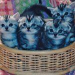 猫ブームの不安・・・