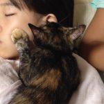 保護猫サビィは耳たぶを吸うクセが・・・動画あり♪