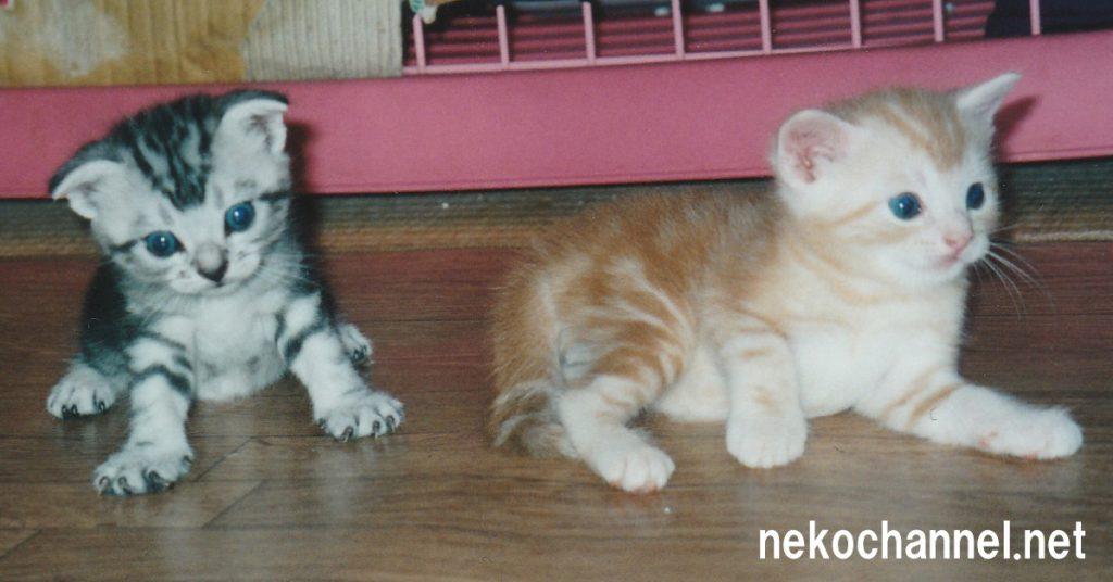 kitty_01-1