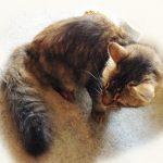 久しぶりに来たロン毛の野良猫さんが甘えん坊に