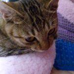 警戒心の強い野良の子猫をついに保護