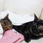 猫の回虫が虫下しを2回やってもまた・・・・(画像あり★末尾に掲載)