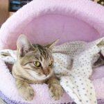 猫へのビブラマイシン(抗生剤)で食道狭窄に?