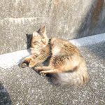 ロングヘアの野良猫さんの最近