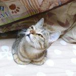 猫に「ビブラマイシン(抗生剤)」を飲ませる時の注意
