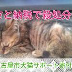 名古屋市「ふるさと納税」で猫の殺処分もゼロを目指したい!