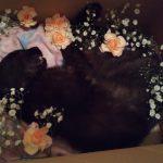 野良猫ペロちゃんが天国に・・・八事霊園のペット火葬へ