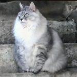 志村動物園ハイジスペシャル 猫のモモちゃんが話題に