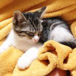 猫が粗相を布団にする原因は? 治らない時の対策・防止の方法