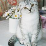 ペット禁止の賃貸で猫を飼うとバレる?ペット可賃貸が礼金ゼロなら引っ越す?