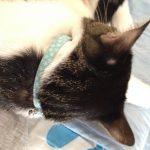 猫の乾燥肌の対策スプレーは何がおすすめ?安全でかゆみにもいいのは