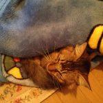 ロングヘアの野良猫さん 下痢 & 玄関に住み着く?!