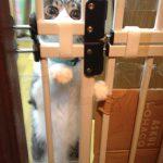 猫の脱走防止の玄関の柵の作り方 (開閉式) 賃貸でも大丈夫!
