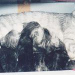 クローズアップ現代の「ネコに家が壊される 多頭飼い飼育崩壊」