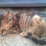 H27年度の猫の殺処分数は?殺処分数を減らすためにできる事