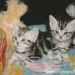 あま市の猫の事件 虐待は許せない!!(動画閲覧注意) 清須市でも