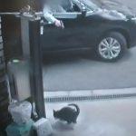 猫をエアガンで撃つ犯人!パンでおびき寄せ / 大阪市住之江区