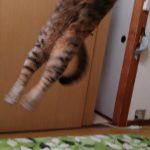 猫じゃらしの遊び方・遊ばない時はどうする?遊ぶ猫の気持ちは?