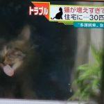 名古屋30匹の猫を飼育女性強制退去・大阪知事が「守ってちょうよ」と…
