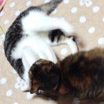 猫に引っかかれた時の傷の薬とすぐにやるべき対処法は?
