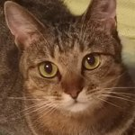 毎日愛眼の口コミ 「猫用」サプリを最安で買うには?